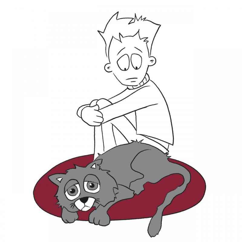 Preventive screening for cats in seniors' age